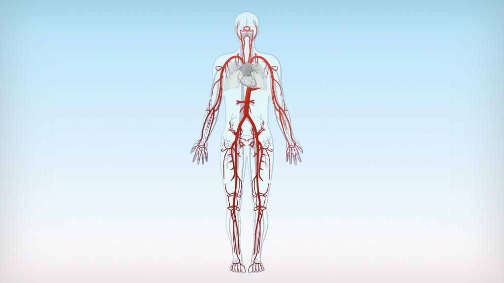 kreussler-pharma-venenlexikon-arterien